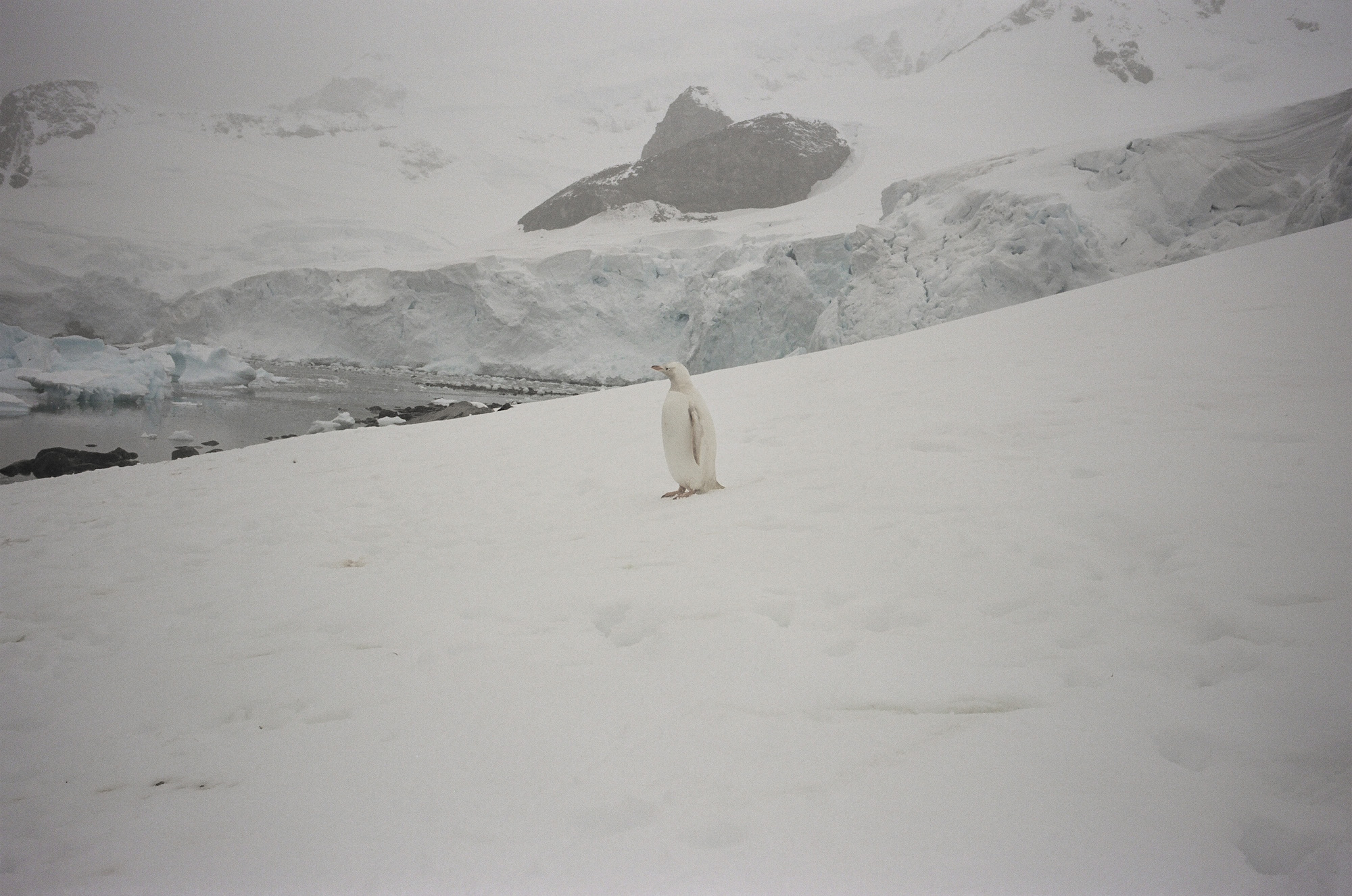 Pierre_Huyghe_Antartica00[1]